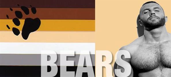 pacote-ursos-2015-594x270